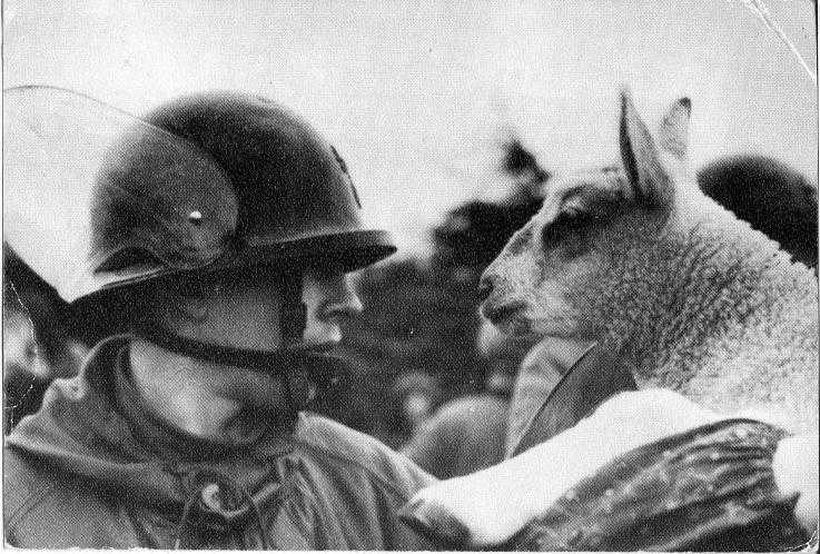 A black and white photo. A soldier on the left is staring into the face of a sheep on the right.